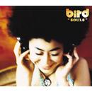 SOULS/bird