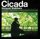 Cicada/槇原敬之