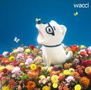 キラメキ/wacci