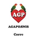 Corre/Agapornis