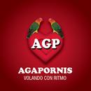 Agapornis - Volando Con Ritmo/Agapornis