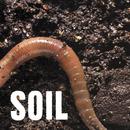 SOiL - EP/SOiL