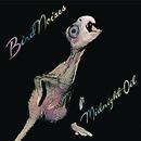 Bird Noises/Midnight Oil