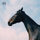 48 feat.Jay Prince/Moss Kena