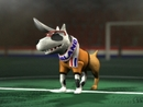 Wij Houden Van Oranje -Auld Lang Syne- (Video)/The Dog