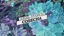 Cosecha (Lyric Video)/Angel Stanich