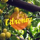 Citroner/Parasol