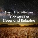 Crickets for Sleep and Relaxing (Sleep & Mindfulness)/Sleepy Times