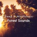 Forest Sounds (Sleep & Mindfulness)/Sleepy Times