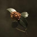 Young Sick Camellia/St. Paul & The Broken Bones