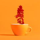 Salvia/Qaijff