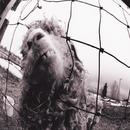 Vs./Pearl Jam